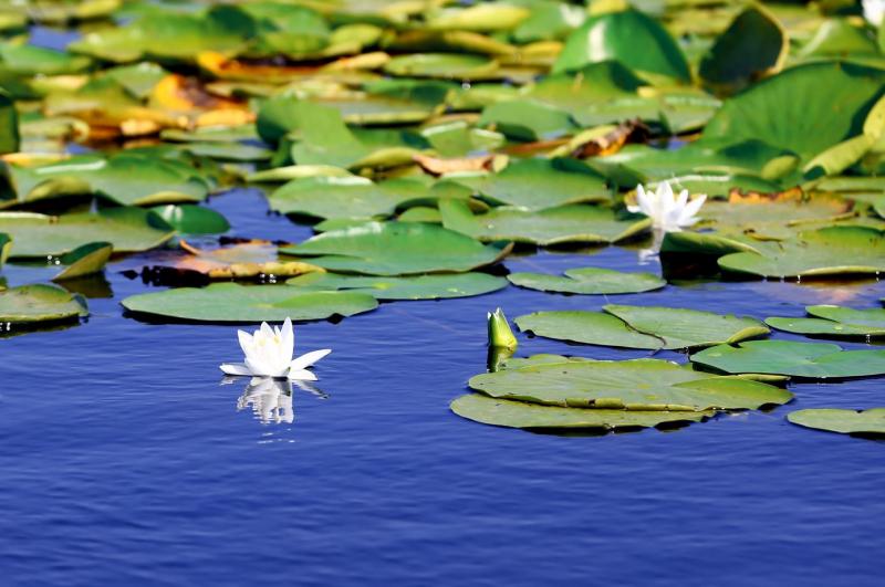 Konya'da Gezilecek Yerler Beyşehir Gölü Su Perileri Nilüfer Bahçesi